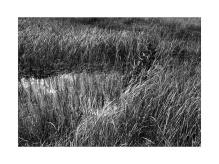 Reeds III