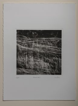 Reeds#4 - Plate 20x20cm - Paper 30x40cm
