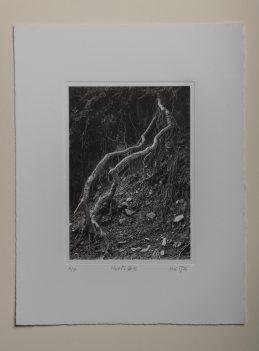 Roots#2 - Plate 16.5x23cm - Paper 28x38cm