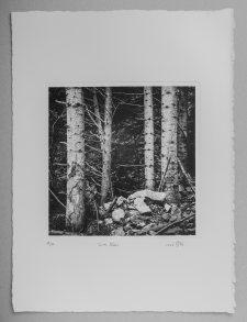 Six trees - Plate 20x20cm